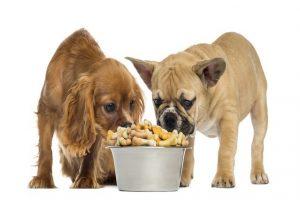 alimentation d'un chien